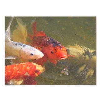 Pescados v.1 de Koi Arte Fotográfico