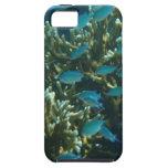 pescados y coral azules iPhone 5 Case-Mate fundas