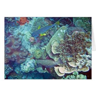 Pescados y coral de la gran barrera de coral tarjeta de felicitación
