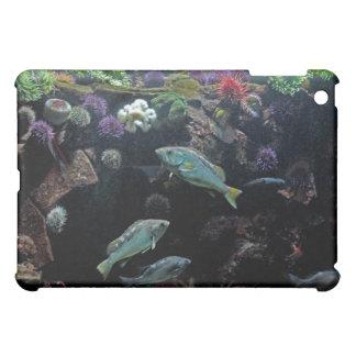 Pescados y foto acuática subacuática de la vida