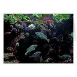 Pescados y foto acuática subacuática de la vida tarjetas