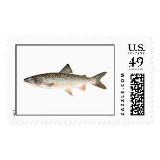 Pescando el sello - pescado de la trucha de lago
