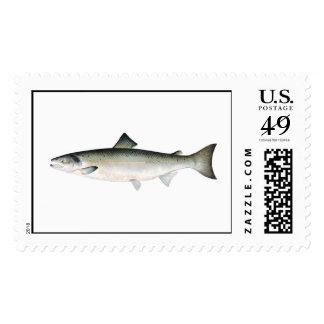 Pescando el sello - pescado del salmón atlántico
