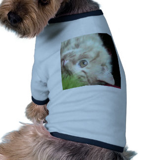 Peso pluma graso ropa de mascota