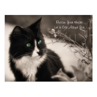 Pet Adoption Rescue Your Heart And Adopt A Cat Postcard