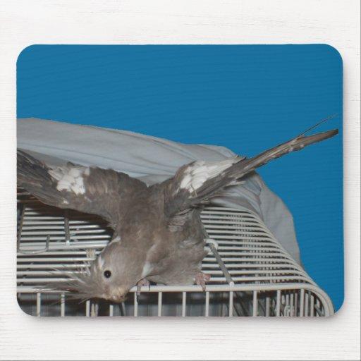 Pet Bird Watcha Doing Mouse Pads