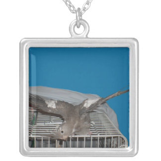 Pet Bird Watcha Doing Silver Plated Necklace