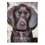 Pet Birth Adoption Announcement Postcard