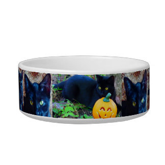 Pet Bowl, Medium, Cat Food Bowl