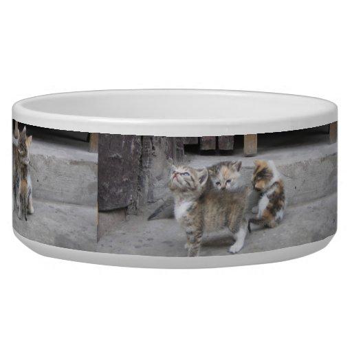 Pet Bowl - Playful Kittens