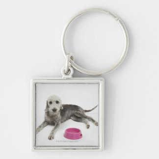 Pet care health and nutrition for domestic pets keychains