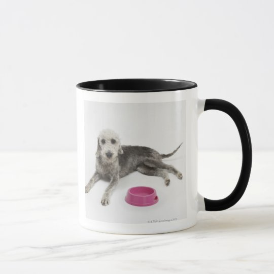 Pet care, health and nutrition for domestic pets mug