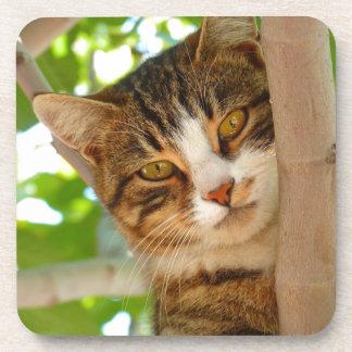 PET CAT COASTER