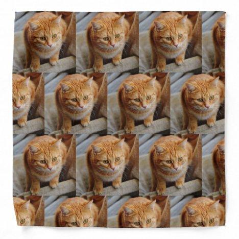 Pet Cat Dog Custom Photo Template Bandana