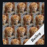 """Pet Cat Dog  Personalized Photo Template Bandana<br><div class=""""desc"""">This design may be personalized in the area provided by changing the photo and/or text. Or it can be customized by choosing the click to customize further option and delete or change the color, the background, add text, change the text color or style, or delete the text for an image...</div>"""