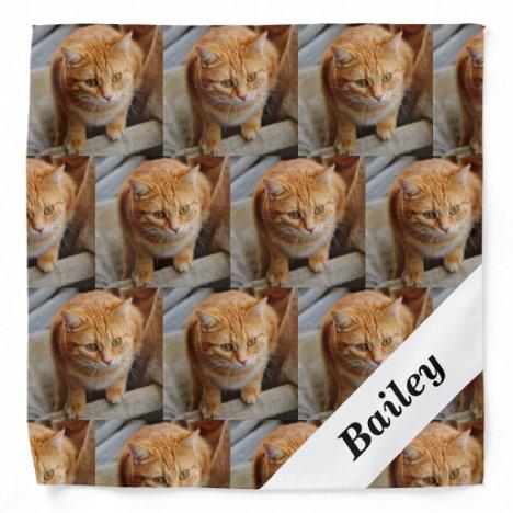 Pet Cat Dog  Personalized Photo Template Bandana