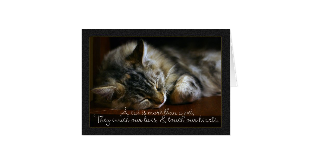 Pet Cat Sympathy Card Loss Of Pet Card Zazzle Com