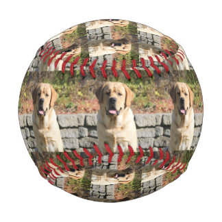 Pet Dog Photo Baseball