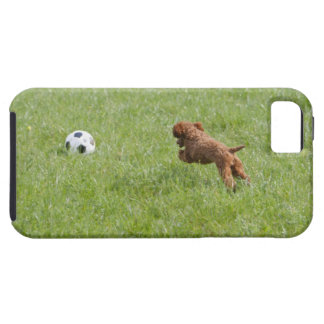 Pet dog running after football in park iPhone 5 case