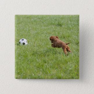 Pet dog running after football in park pinback button