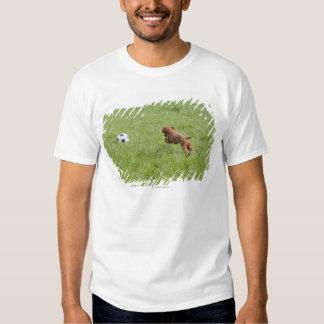 Pet dog running after football in park t shirt