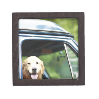Pet dog sitting in a car premium jewelry boxes