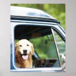 Pet dog sitting in a car print