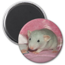 Pet Fancy Rat Magnet - Baby Russian Silver Dumbo