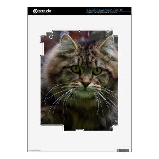 Pet-lovers Cute Cat Designs on Electronics Skin iPad 3 Decal