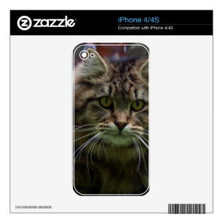 Pet-lovers Cute Cat Designs on Electronics Skin iPhone 4 Decal