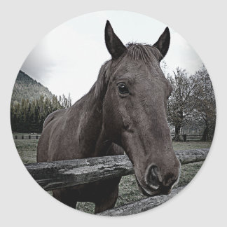 Pet me Please! Black and White Horse Classic Round Sticker