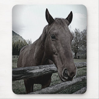 Pet me Please! Black and White Horse Mouse Pad