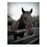 Pet me Please! Gentle Horse Postcard