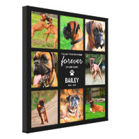 Pet Portraits & Prints<