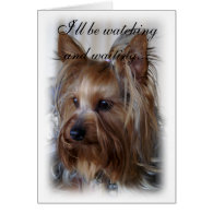 Pet Memorial Sympathy Cards