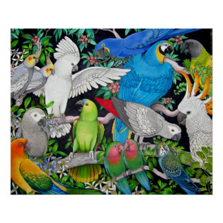 Pet Parrots of the World Poster
