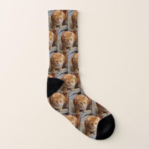 Pet Photo Customized Fun Dog Cat Socks