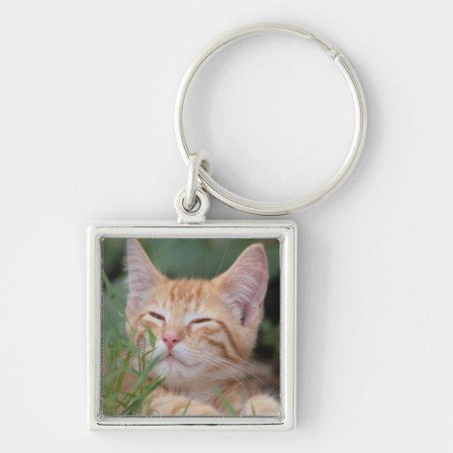 Pet Photo Key chain