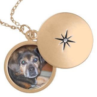 Pet Photo Memory Locket Gold Finish