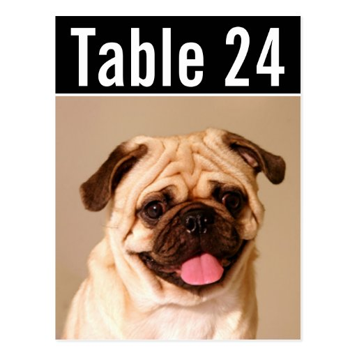Pet Photo Table Number Cards | Custom Template Postcard