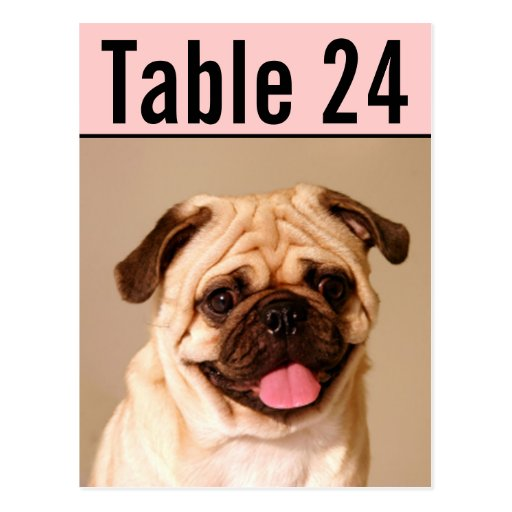 Pet Photo Table Number Cards | Custom Template Postcards