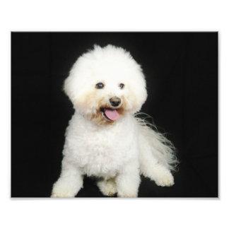pet portrait photo print