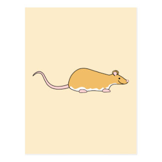 Pet Rat. Cinnamon Berkshire, White Belly. Postcards