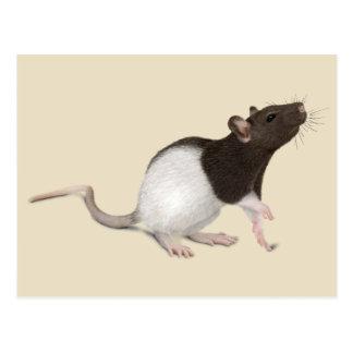 Pet Rat Painting Post Cards