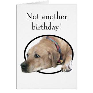 Pet Rhodesian Ridgeback Dog Picture Card