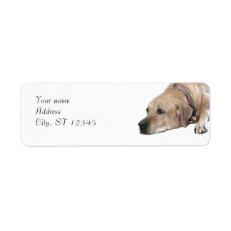 Pet Rhodesian Ridgeback Dog Picture Label