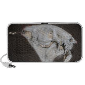 Pet' S Speaker System