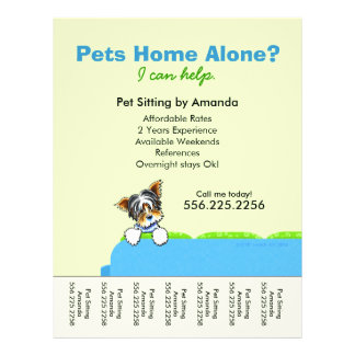 Pet Sitter Ad Yorkie Couch Green Tear Sheet Flyers