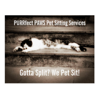 Pet Sitting Business with Tuxedo Cat on Steps Postcard