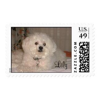 Pet STAMP_LILY-bichon frise Postage